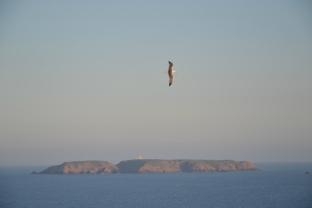 Berlengas Archipelago © Nuno Barros