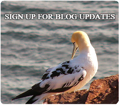 Seabird Task Force news in your inbox