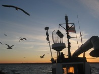 Early morning in Lithuanian Baltic Sea on board gillnet vessel © Marguerite Tarzia/BirdLife International