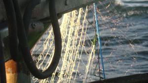 Modified nets © BirdLife International