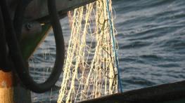 High visibility gillnet panels being trialled © Marguerite Tarzia/BirdLife International
