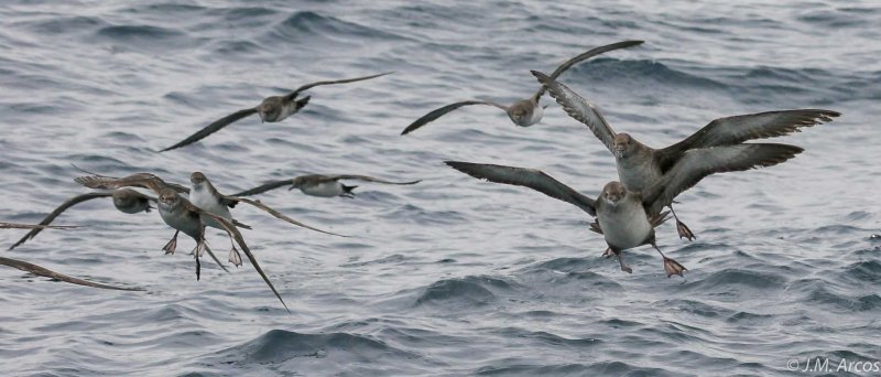 New Seabird Task Force to address bycatch in Europe: the Mediterranean point of view