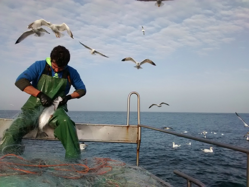 Seabird Task Force sets sail in Portugal