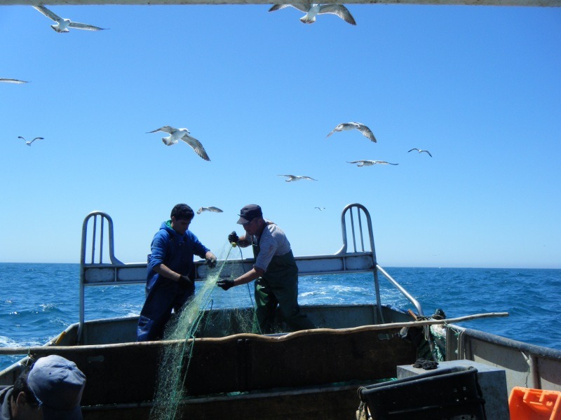 First measures to reduce seabird bycatch in Portugal