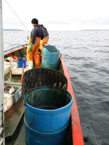Hauling the fishing gear in a boat of Chile. Photos: Vero Cortés