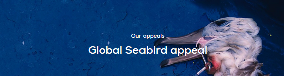 RSPB- Global seabird appeal-